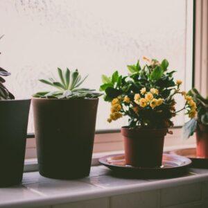 Ghivece si jardiniere din lemn