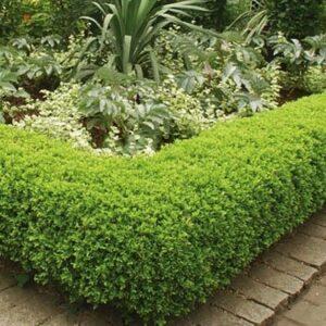 Plante pentru garduri vii