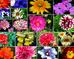 Flori Vara Gradina Jardiniera Vase Ornamentale Flori De Vara
